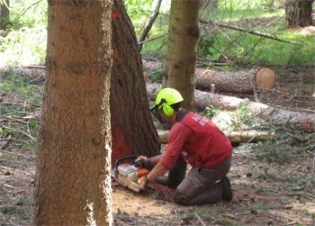 Modifiche e semplificazioni al regolamento forestale in vigore dal 1° settembre 2015